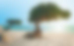 Spedire pacchi a Aruba economici