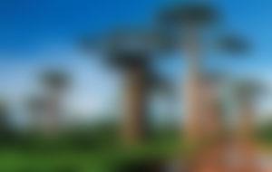 Envios a Madagascar Express