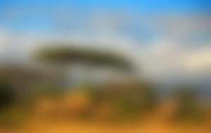 Spedizione economica in Tanzania